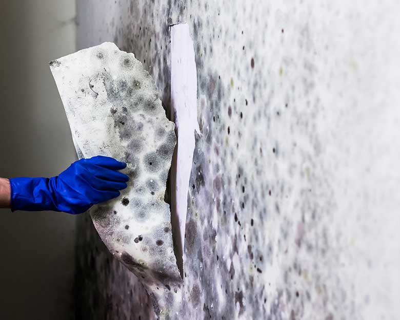 Mould Treatment Coffs Harbour | Axis Painting